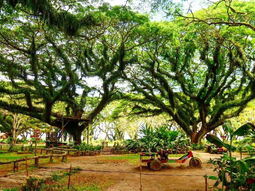 Spot foto menarik diantara pepohonan raksasa. Foto : Instagram / nature_of_harmony