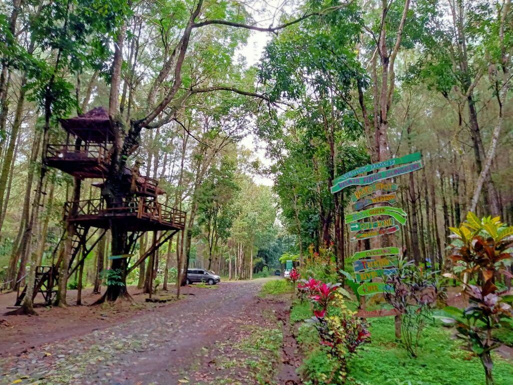 Suasana Hutan Wisata Pinus Songgon - Foto: Google Maps / Ary Wibowo