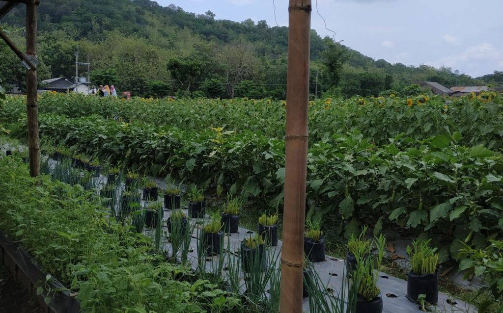 Tanaman Hortikultura