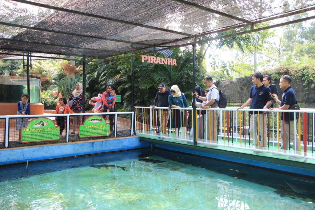 Zona Ikan Piranha