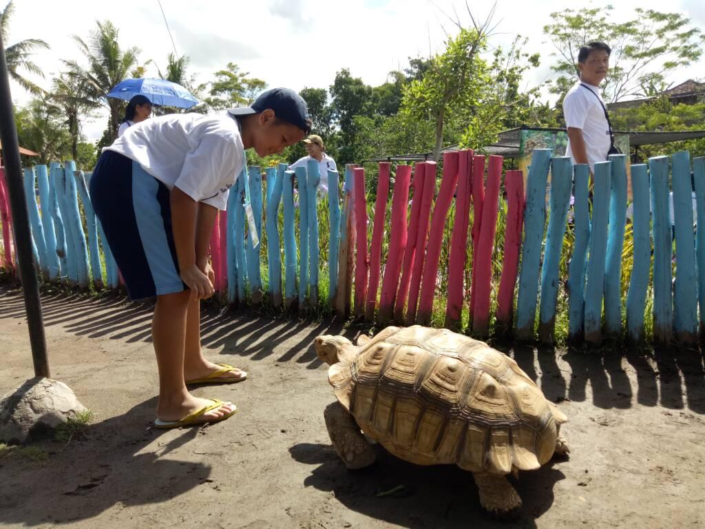 berinteraksi dengan kura-kura