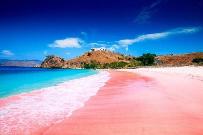 Pasir merah muda merupakan fenomena langka yang ada tujuh lokasi di dunia dan Pantai Pink Lombok Timur NTB menjadi salah satunya - erlin dhita