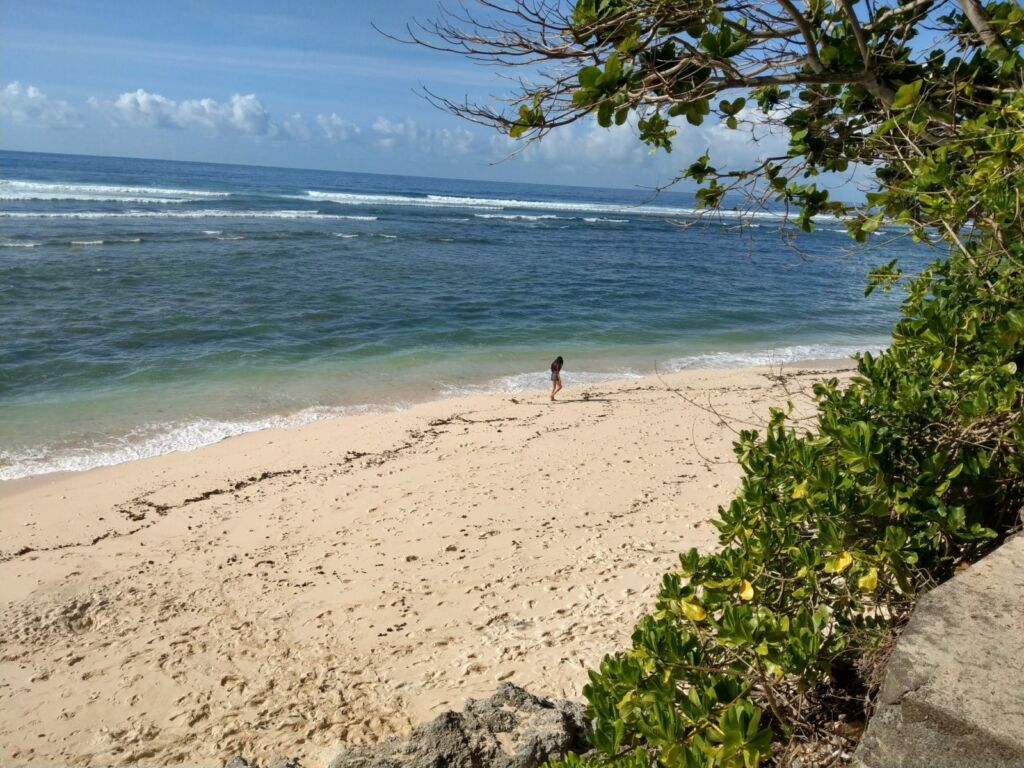 Pepohonan di sekitar Pantai