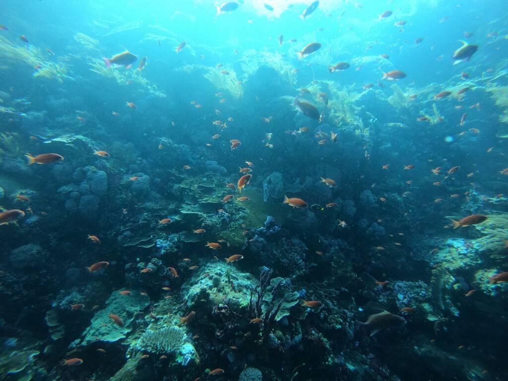 Ikan dan Terumbu Karang di Batu Bolong