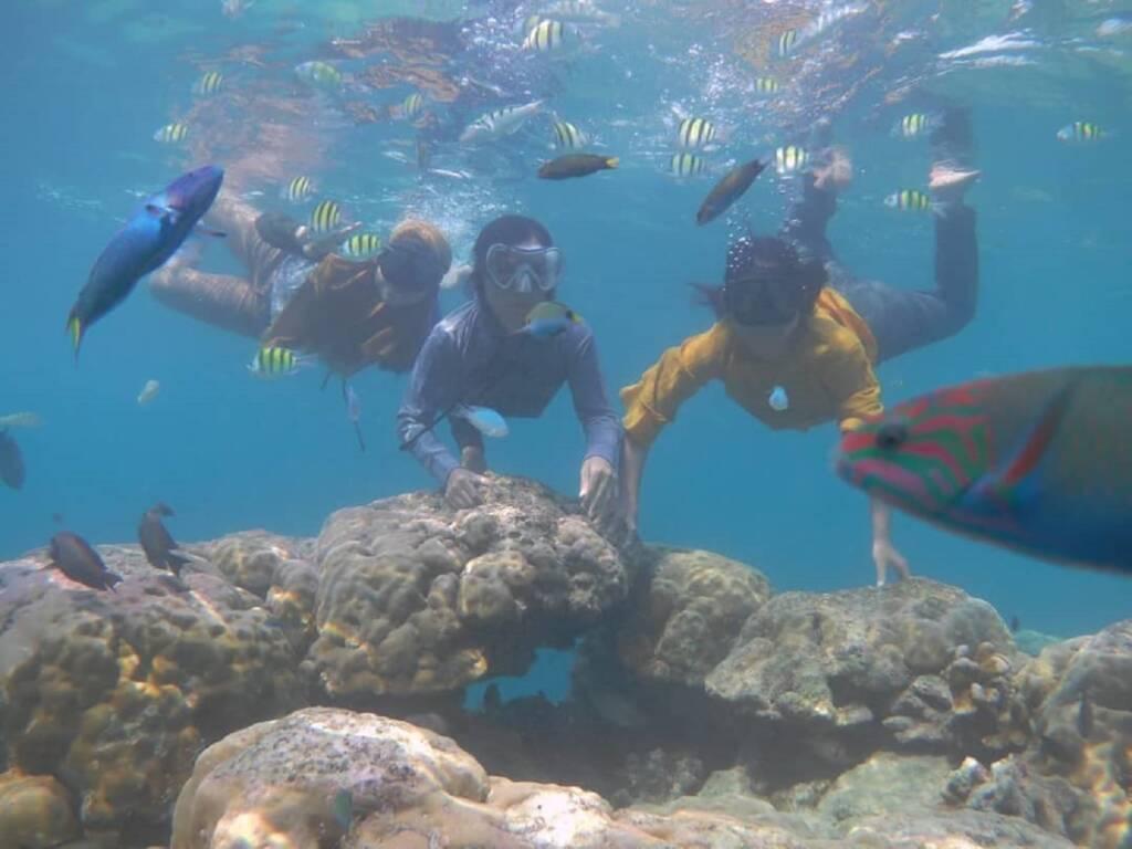 snorkeling dan menyelam menikmati keindahan bawah laut