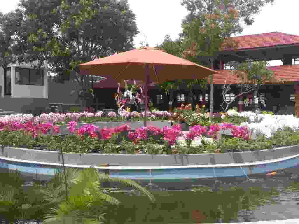 Bunga Anggrek yang Dikelilingi Kolam Ikan