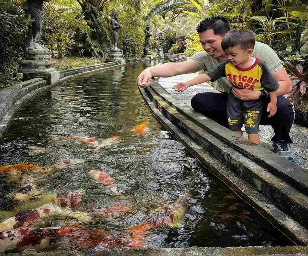 kegiatan memberi makan ikan