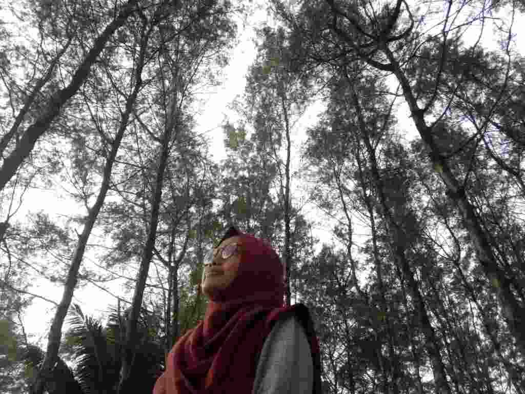 Rindangnya Hutan Cemara