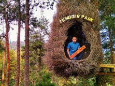 Spot Foto Sarang Burung Tenggir Park