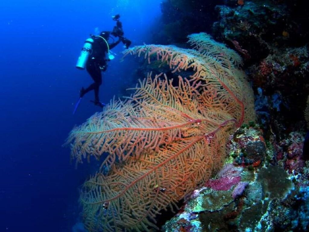 kawasan Taman Nasional Wakatobi, Kabupaten Wakatobi, Sulawesi Tenggara - Scuba-DoBeDo Dive