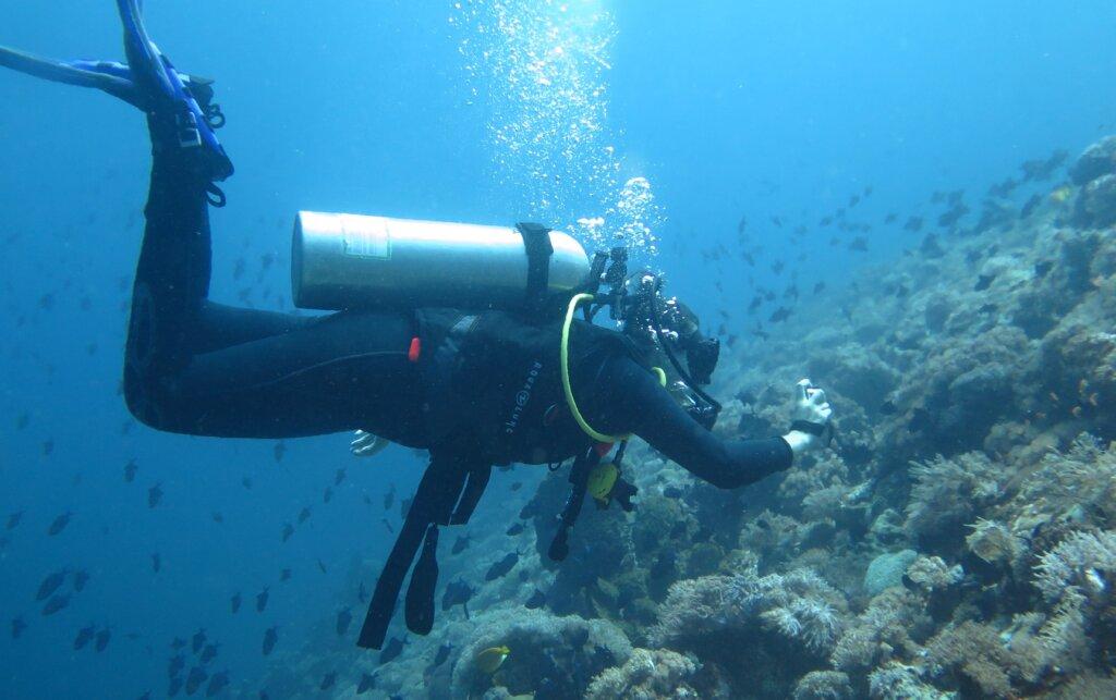 menyelam di perairan sekitar pulau