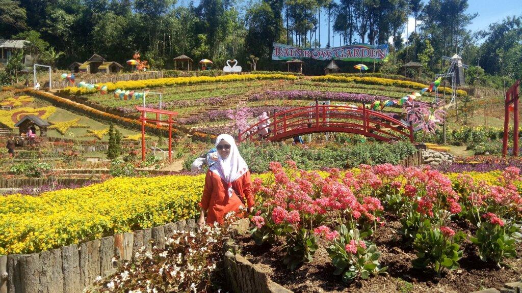 Hamparan Bunga di Taman Bunga Kutabawa Purbalingga