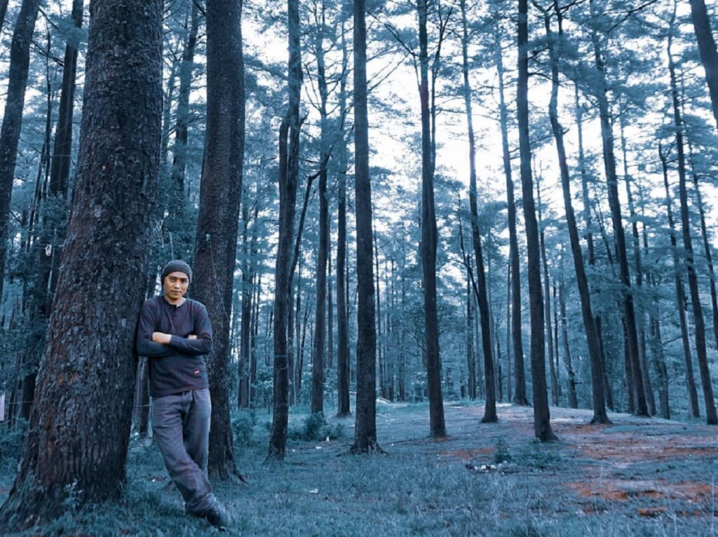 area Hutan pinus di Malino Highlands