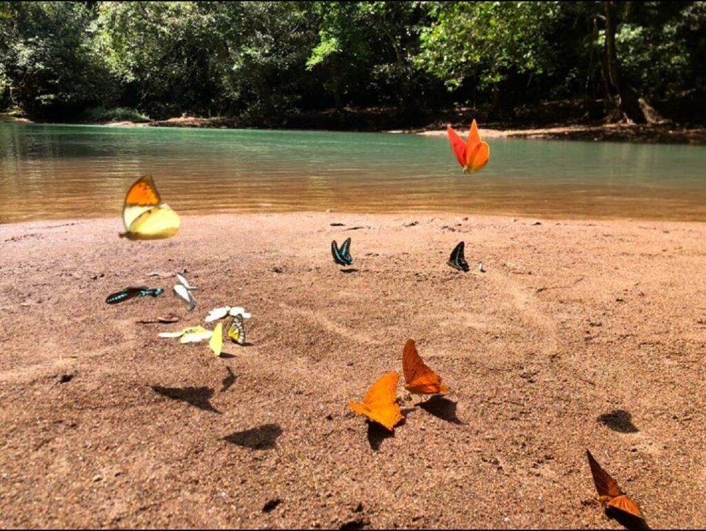 kupu-kupu berbagai spesies di Taman Nasional Bantimurung