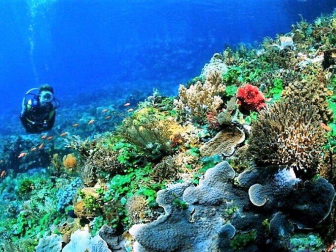 Menyelam di Pulau Selayar Kepulauan Selayar Sulawesi Selatan - ryan araginggang