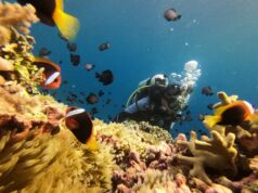 Menyelam di perairan Pantai Cemara Wakatobi Sulawesi Tenggara - AWALUDDIN AK
