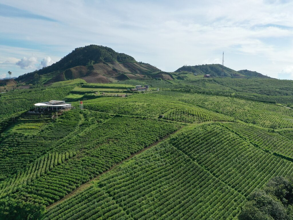 Area perbukitan dengan perkebunan teh