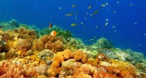 keindahan terumbu karang di taman laut pulau kambing