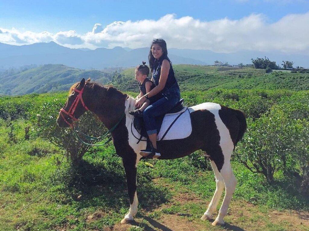Berkuda menjelajahi kawasan perkebunan teh