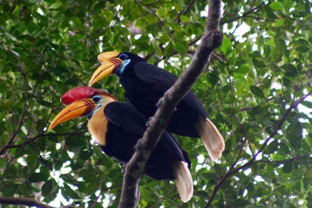 keanekaragaman flora dan fauna di Hutan Lambusango