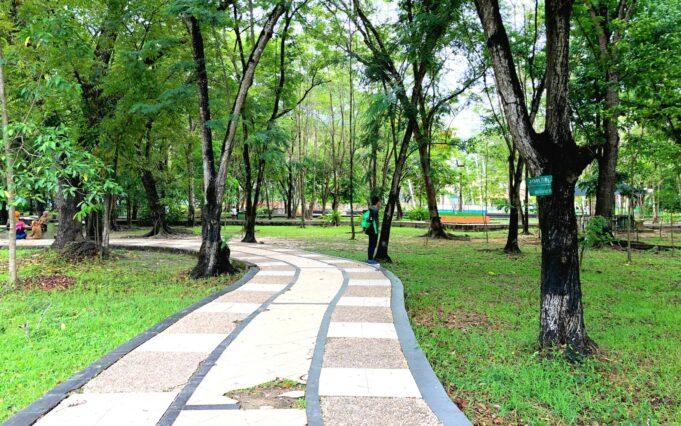 area taman yang dipenuhi pepohonan