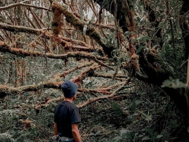 hutan lumut di Gunung Singgalang