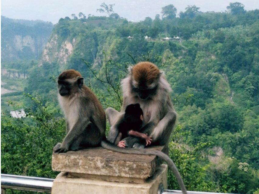 Monyet ekor panjang di sekitar ngarai