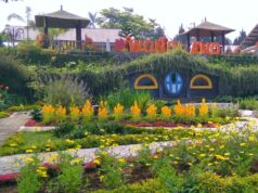 area taman bunga wonoland wonosobo