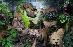 Cats of the World di Rahmat International Wildlife Museum & Gallery Medan Sumatera Utara - Adi Putra