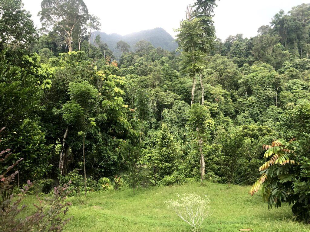 Kawasan hutan ekowisata Tangkahan yang kaya akan keanekaragaman hayati - Foto : GoogleMaps/Kids Stella