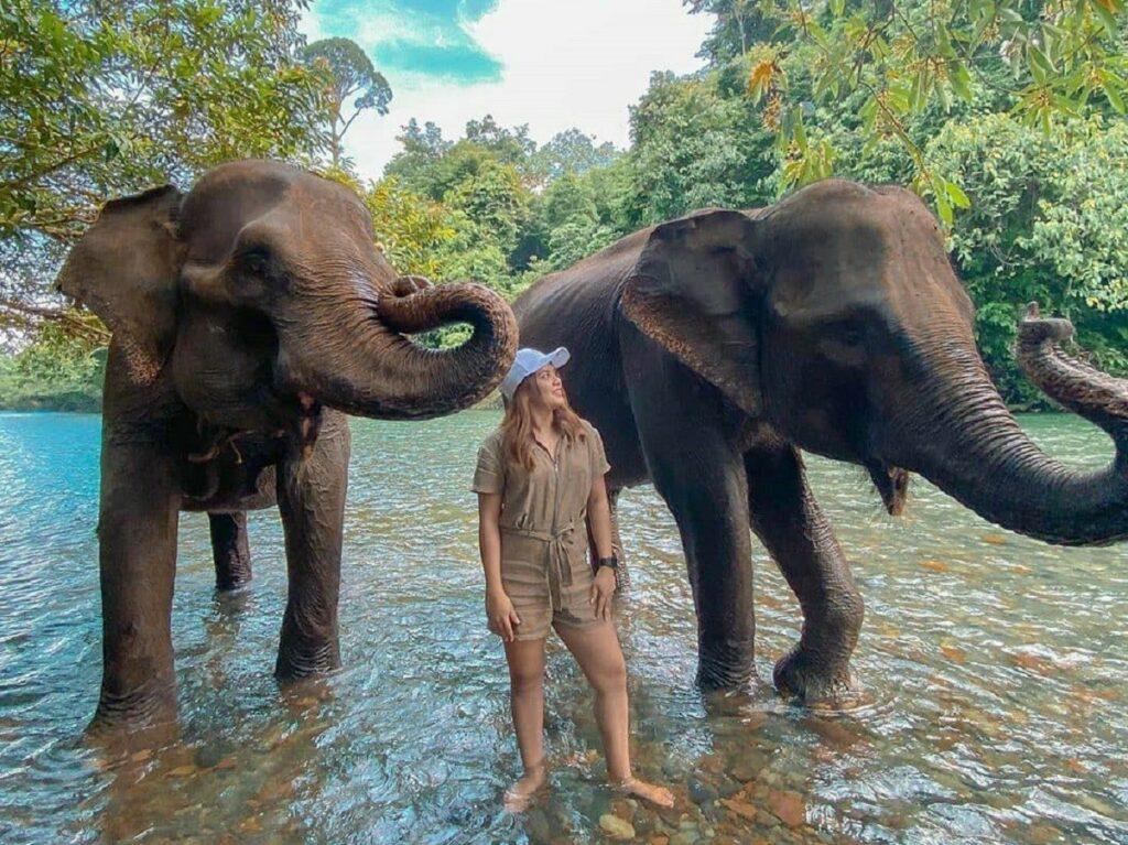 Memandikan gajah di kawasan ekowisata tangkahan