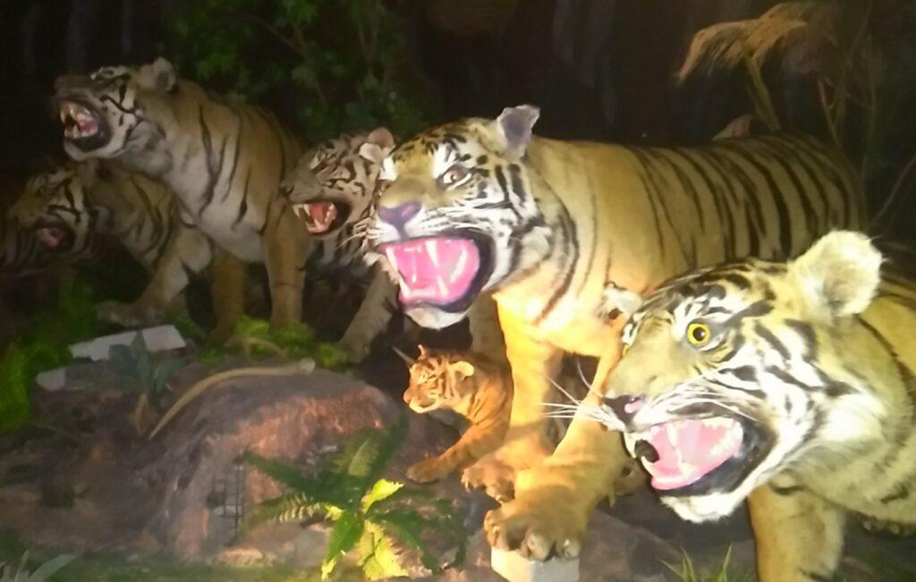 Night safari di Rahmat International Wildlife Museum & Gallery Medan Sumatera Utara - T Alidrus