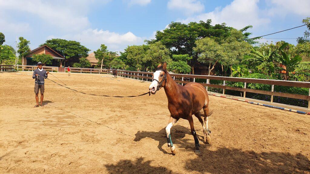 Pelatih dan Kuda yang siap Diajak Berlatih