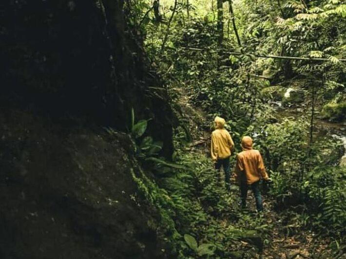 jalur trekking menuju air terjun yang masih hutan