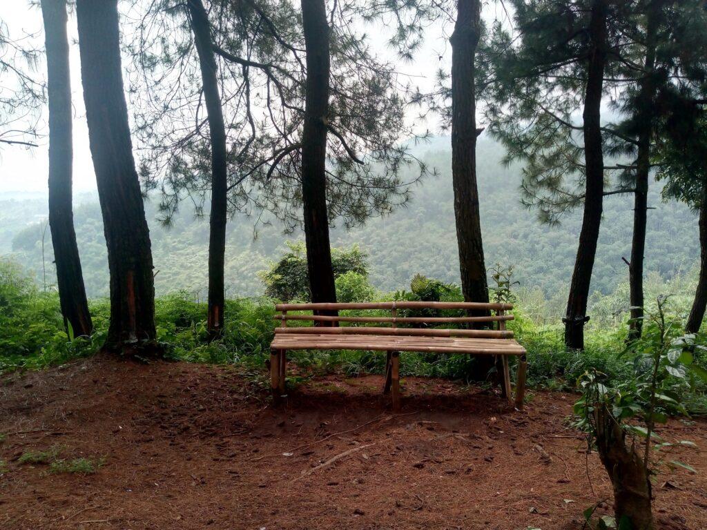 Jalur Hutan Pinus untuk Trekking
