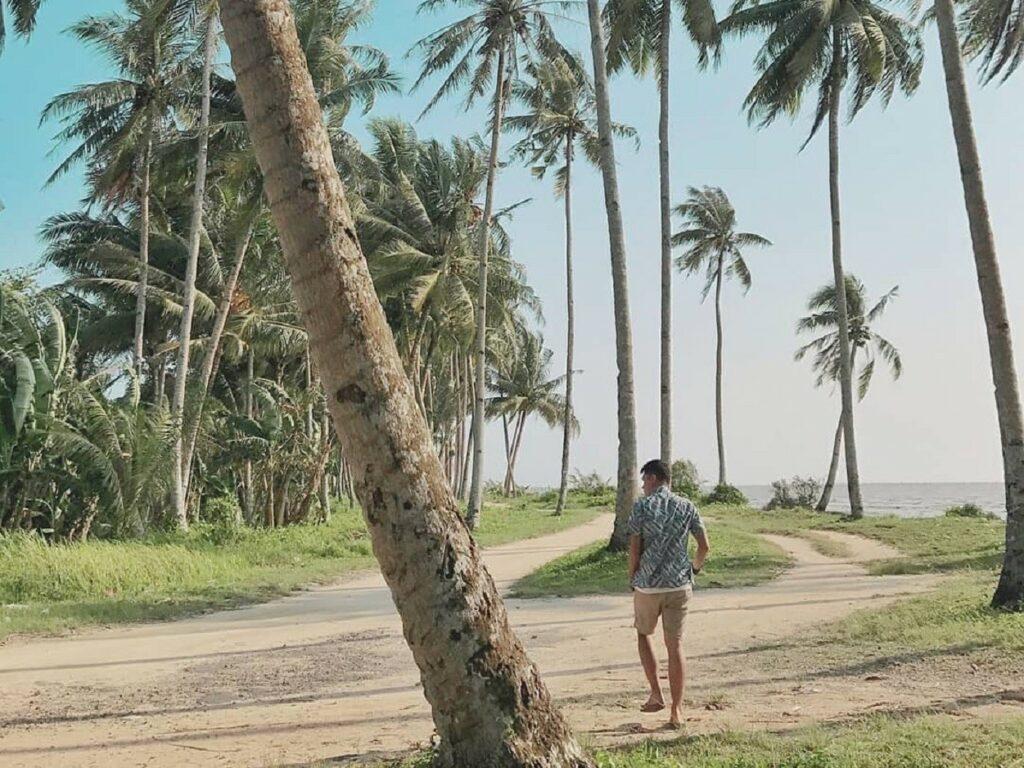 area pantai yang dipenuhi pohon kelapa