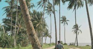 area pantai kijing yang ditumbuhi banyak pohon kelapa