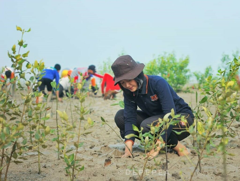Kegiatan menanam bakau di area hutan mangrove