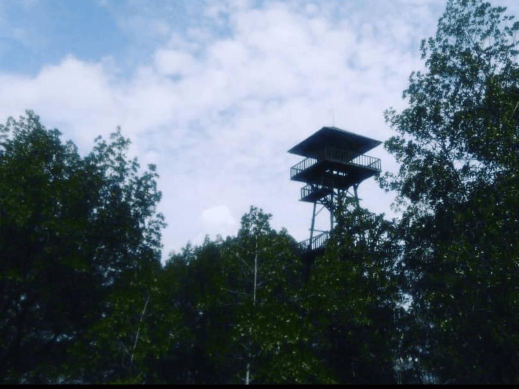 Menara pandang di tengah hutan