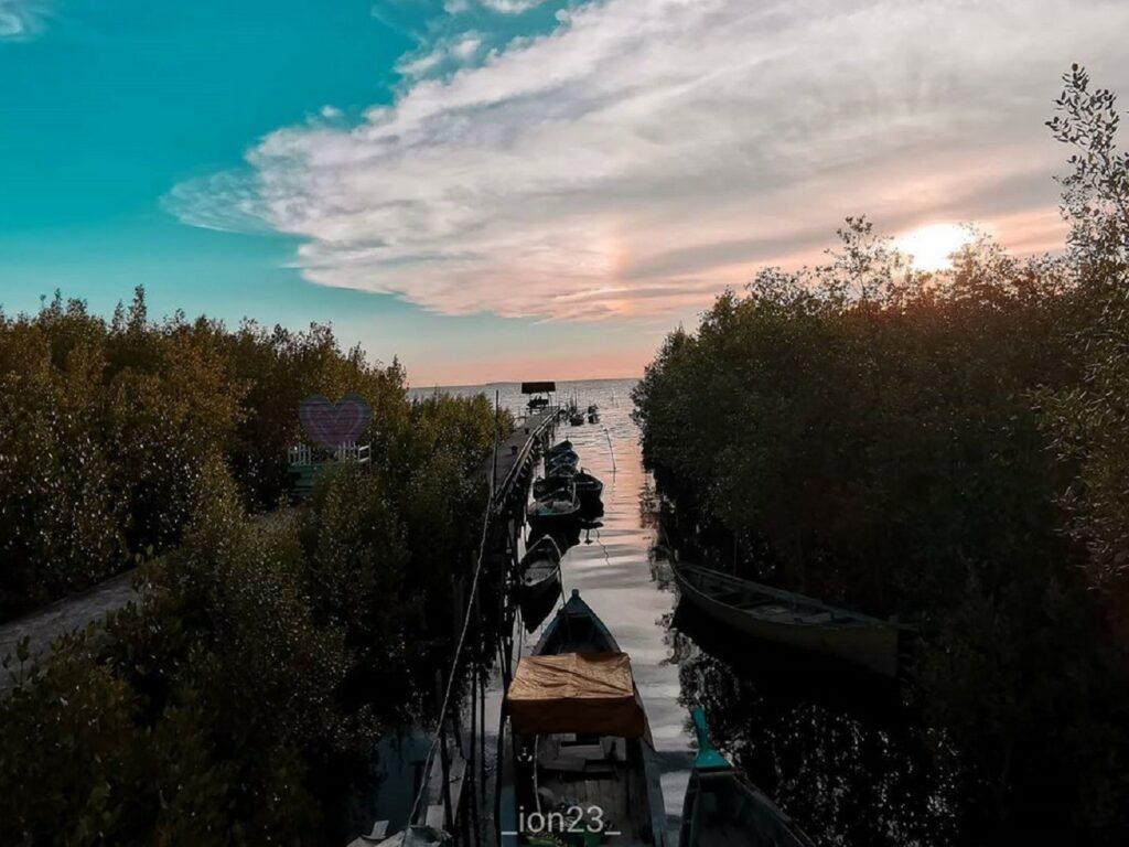 Naik perahu menyusuri hutan bakau Mempawah Mangrove