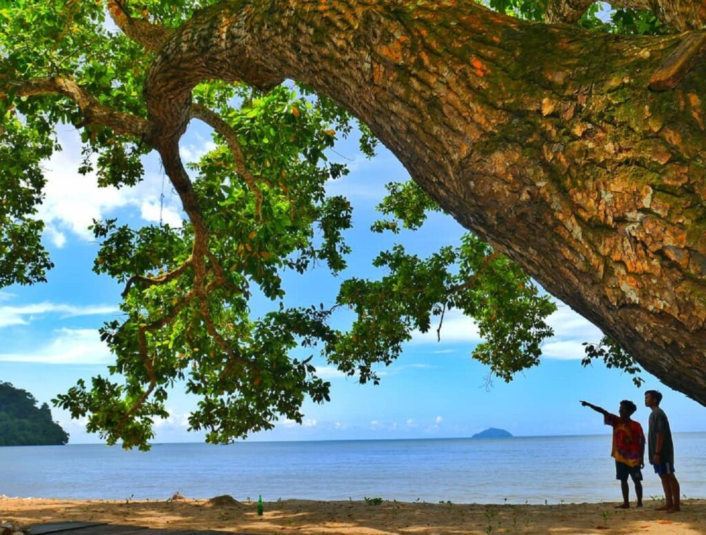 Pepohonan raksasa sekitar Pantai