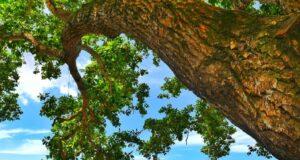 Pepohonan sekitar Pantai Pulau Datok Kayong Utara Kalimantan Barat membuat suasana menjadi teduh - agustinuserfan94