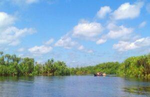 Sungai yang mengalir di taman nasional sebangau