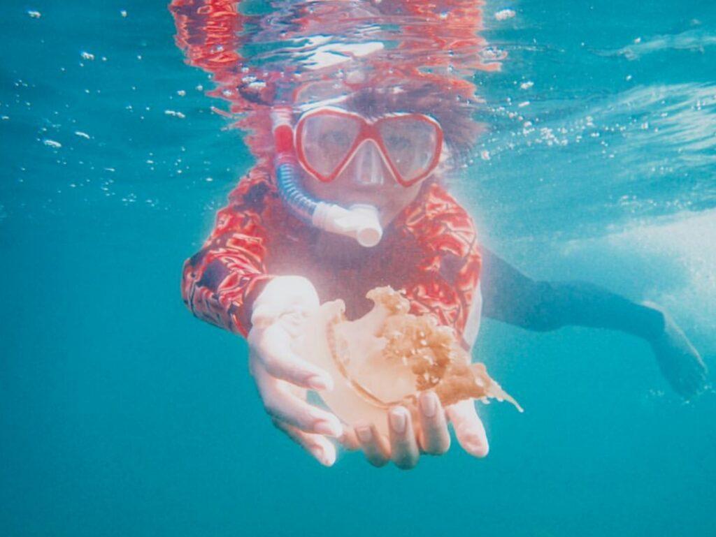 Pengunjung berenang bersama ubur-ubur