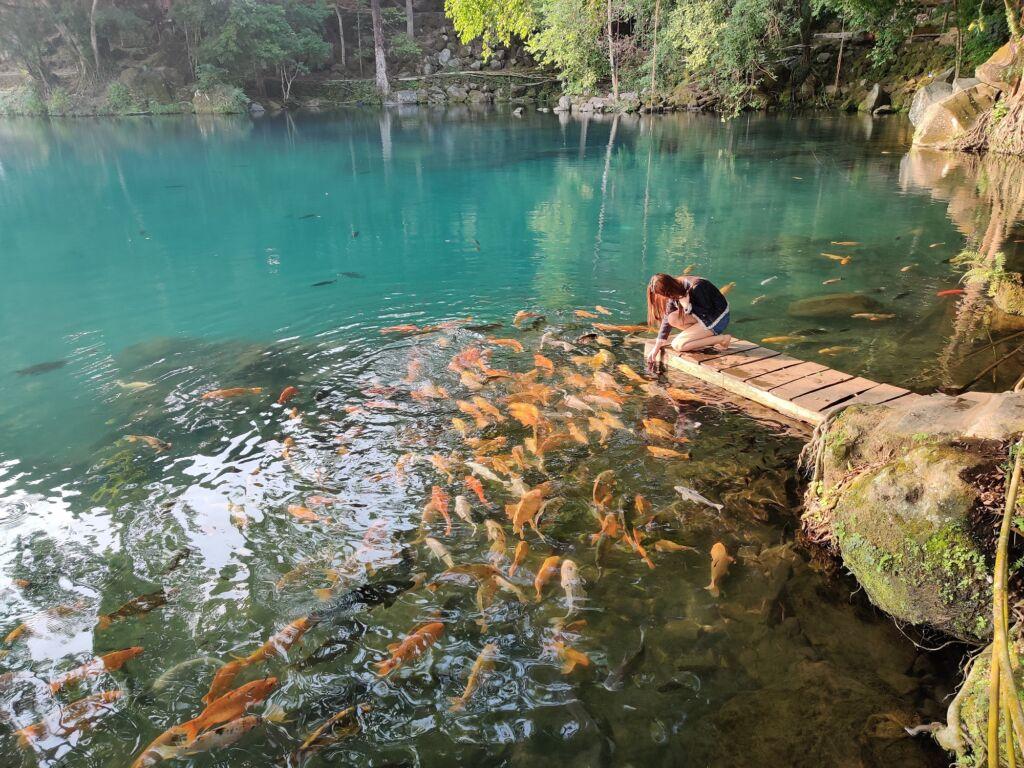 Memberi Makan Ikan di Tepi Danau