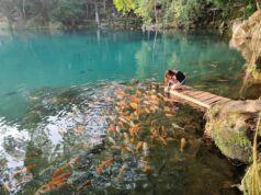 Memberi Makan Ikan di Tepi Danau Situ Cicerem