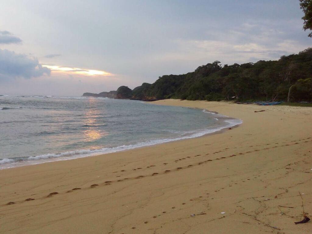 area tepi pantai dengan pasir putih dan pepohonan