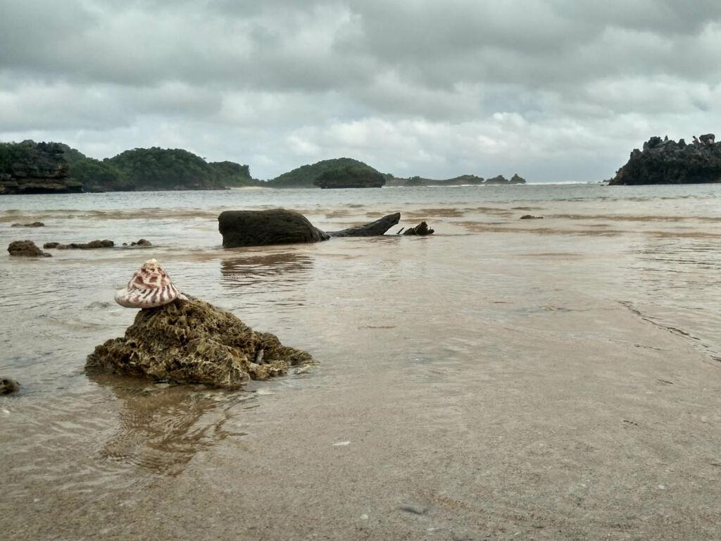 biota laut yang terdampar di pantai kondang merak