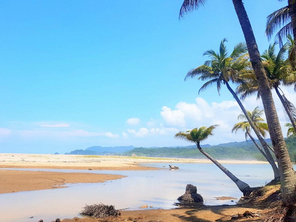 Pemandangan eksotis tepi pantai dengan pohon kelapa
