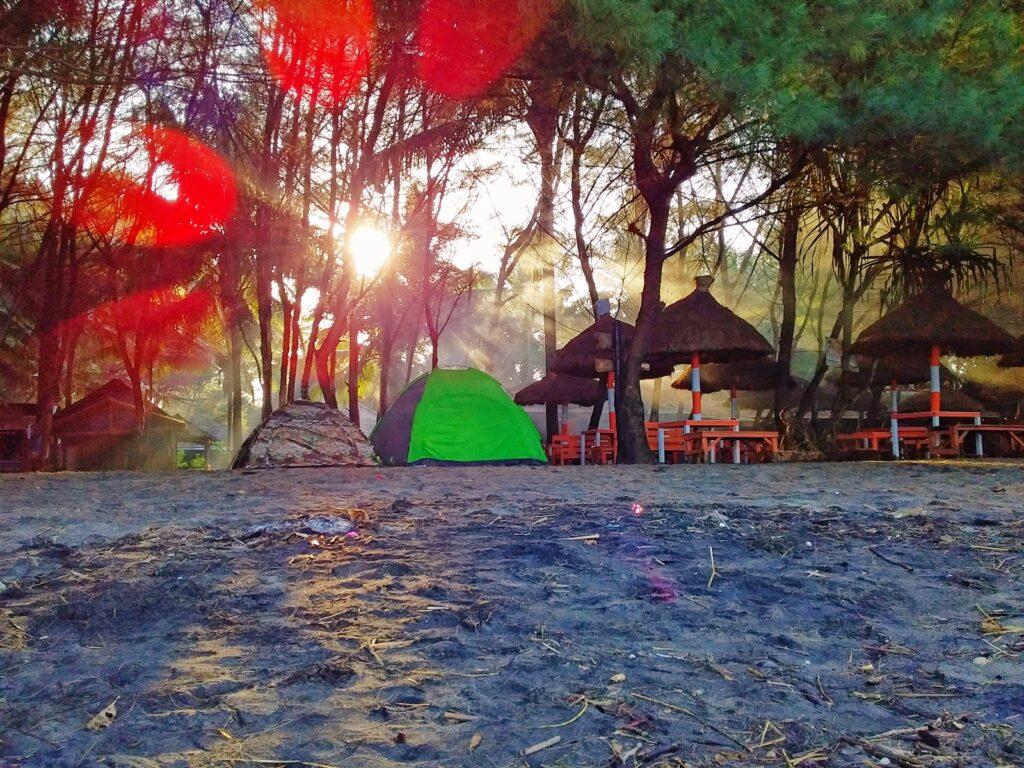 Tenda-tenda berkemah didirikan di kawasan hutan cemara tak jauh dari bibir pantai